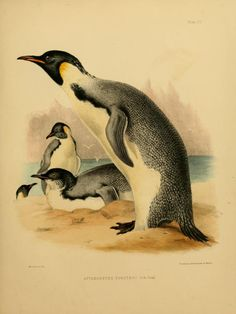 1 - The zoology of the voyage of the H.M.S. Erebus & Terror, - Biodiversity Heritage Library