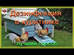 Soda, Rooster, Woodworking, Chicken, Armenia, Youtube, Lawn And Garden, Beverage, Soft Drink