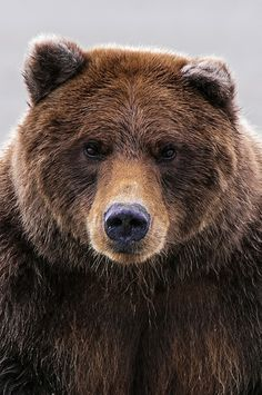 Not all bears are created one color, there's brown, white/cream, black....it's almost like humans, huh, imagine not creating everything one color...get out the brown box, please...life is full of color, enjoy the variety.