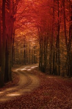The way by Anke Kneifel. more with healing sounds: Autumn Scenes, Autumn Aesthetic, Autumn Cozy, Walk In The Woods, Autumn Photography, Fantasy Landscape, Fall Photos, Belle Photo, Pretty Pictures