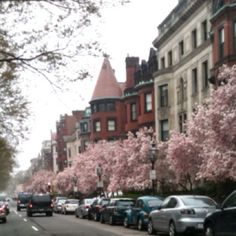 Beautiful trees in bloom along Commonwealth Avenue, Back Bay