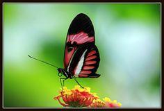 "Thema: Frühlingsgefühle | Gewinnerfoto: ""Butterfly World"" | Fotograf: SilvanaR | http://www.computerbild.de/fotowettbewerb"