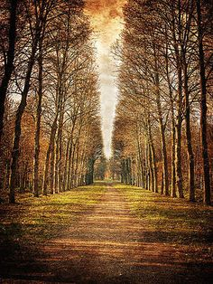 Aren't we glad Marie wanted the populace to have some cake, too?✯ Path in the Woods - Versailles, France Beautiful World, Beautiful Places, Love The Earth, French History, Ways Of Seeing, Covered Bridges, Cool Landscapes, France, Nature