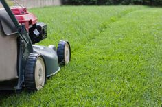 Fox Mowing SA has an extensive network across Australia. has grown and become a leader in lawn mowing and garden services through offering training and support to our quality Franchisees.