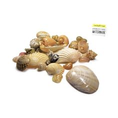 Bunch of sea shells photo by Mauro Rodrigues, LuckyOliver stock photo ❤ liked on Polyvore featuring backgrounds, decor, beach, shells and sea