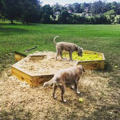 We designed and built a bee-hive-esque sand pit and tennis ball pit for the dogs at the Farm