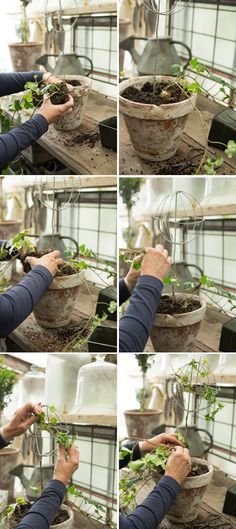 Topiary Globe topiary tutorial - The House That Lars Built - I've had a thing for topiaries ever since I could pronounce the. Topiary Plants, Topiary Trees, Potted Plants, Love Garden, Easy Garden, Container Plants, Container Gardening, Container Flowers, Outdoor Plants