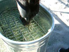What's the Deal With Slow Feeders For Horses? | EcoEquine