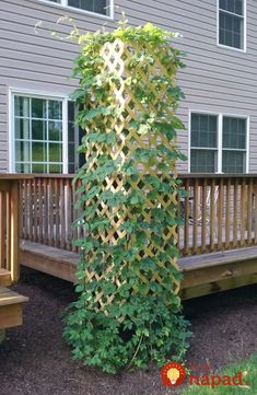 Side of deck with clematis-- Lattice Fence Panel Can be Great Garden Trellis on the Corner of a Deck or Patio Diy Trellis, Garden Trellis, Garden Fencing, Deck Trellis Ideas, Hops Trellis, Wisteria Trellis, Lattice Ideas, Privacy Trellis, Clematis Trellis