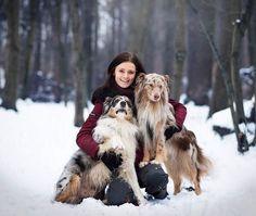 """Se psy podle Veroniky 🐾 na Instagrame: """"Zima s Akimem&Merlinem ☃️💙! Aneb Akim a jeho photo-bombing opět nezklamal🤣🤪. Jsem ráda, že jsem se stihla vzpamatovat z covidu a tuhle…"""" Australian Shepherd, Merlin, Veronica, Instagram, Aussie Shepherd"""
