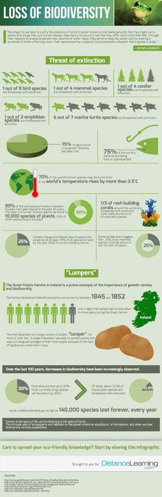 Loss of Biodiversity Infographic. Breaks my heart that our species can be so selfish.