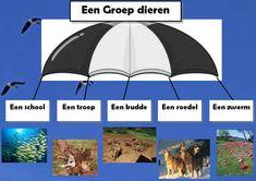 Miniatuurafbeelding voor de versie van 10 jun 2012 om 11:44 School Hacks, 21st Century, Dutch, Teaching, Parachutes, Image, Om, Biology, Africa