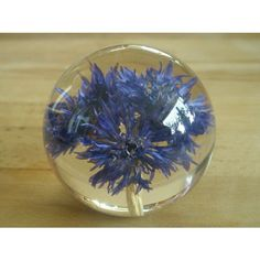 Welsh Hafod Grange Cornflower Paperweight Listing in the Funky Things,Decorative,Home & Garden Category on eBid United Kingdom | 145787534