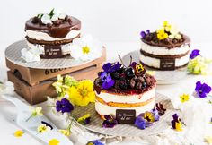 NEW CAKE 2017: Caterina - Delicate semifreddo decorated with edible flowers, in three exquisite combinations: stracciatella, mint and chocolate, fruit.