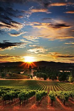Napa Valley,California. I would love to visit wine country!