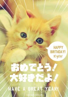 Birthday Photos, Birthday Cards, Happy Birthday Animals, Geek Culture, Akira, Geek Stuff, Kawaii, Cats, Funny