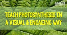 The interactive PowerPoint lesson we created allows your students to experience the power of visual learning while you teach them everything they need to know about photosynthesis. We took one of the most important concepts in biology, ripped it apart, an Science Classroom, Teaching Science, Science Activities, Science Experiments, Teaching Kids, Science Lessons, Life Science, Earth Science, Powerpoint Lesson