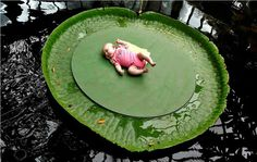 Giant Amazon Water Lily, one leaf can support up to 70 pounds.