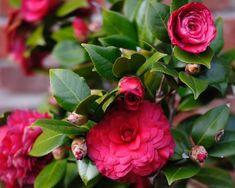 7 лучших зимнецветущих комнатных растений (продолжение). Обсуждение на LiveInternet - Российский Сервис Онлайн-Дневников