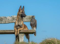 "Gabriele Corno - Google+ ""Who is coming?"".......by Tanja Brandt"