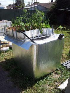 My current home aquaponics system
