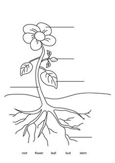 Label the Parts of a Plant Outdoor Worksheets Printables