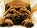 The arctic air has settled in & can reek havoc on your skin if you are not careful. Take precautions to stay moisturized & wrinkle free. Wrinkles are only cute on Shar pei dogs & pugs. Never leave the house without an extra layer of moisturizer on &a Shar Pei Puppies, Bulldog Puppies, Cute Puppies, Cute Dogs, Cute Babies, Puppies Puppies, Dalmatian Puppies, Bulldog Breeds, Puppy Breeds