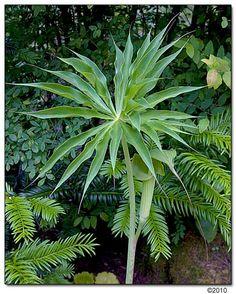 68 Best Tropical Plants Zone 6 Images Plants Tropical Plants