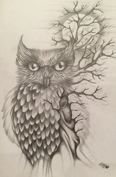 Owl entangled in a tree