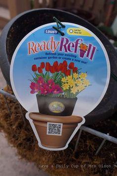 plant a spring blooming birdbath, gardening