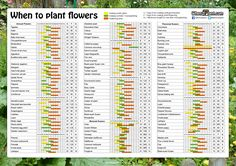 When to plant flowers. Sowing calendar. Seeds pots list 1. Annual Flowers 2. Biennial flowers 3. Perennial flowers days sowing planting distance. Flower seed planting calendar