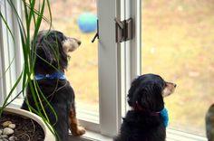 Window Watchers