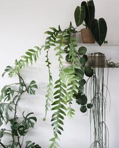 plant shelfie trailing plants plant family plant g Foliage Plants, Potted Plants, Indoor Plants, House Plants Decor, Plant Decor, Belle Plante, Garden Living, Plant Shelves, Green Plants