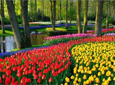 Keukenhof Gardens in Amsterdam. Must see before I die. Note to self- next time your in Amsterdam, visit when tulips are in BLOOM!!