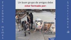 Memes Divertidos Videos Chistosos Para Whatsapp Cortos Facebook Memes Memes Animals Chistes