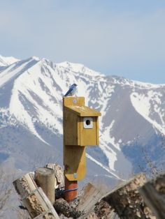 Bluebird uses the nesting box each Spring in Mackay, Idaho