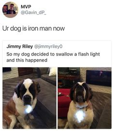 The Funniest Pictures of Today's Internet