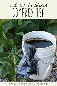 Learn how to make comfrey tea for use as a homemade natural fertilizer in your garden. It's easy to make and provides nutrients for your plants! Comfrey tea is an awesome homemade natural fertilizer for your garden! Compost Tea, Garden Compost, Garden Pests, Organic Fertilizer, Organic Gardening, Gardening Tips, Homemade Fertilizer For Plants, Pallet Gardening, Gardening Quotes