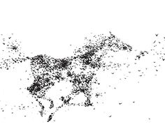 """Black and White Art Poster of flock of birds creating horse. Large 24"""" x 36"""" black and white poster. art. """"Freedom"""" by Laura Sue Minimal yet bold in concept. Art that couples agree on, love this poster! © LauraSue - the rights and reproduction privileges of this image belong to the artist Laura Sue."""