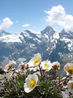 The Schilthorn, Switzerland - http://www.afar.com/places/schilthorn-lauterbrunnen-2?context=wanderlist&context_id=25838