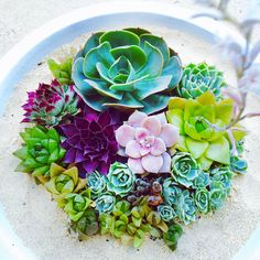 Beautiful combination of succulents