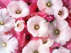 Blüten - Hintergrundbilder: http://wallpapic.de/natur/bluten/wallpaper-10965