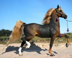 Black chestnut Arabian stallion. It looks like a life size Breyer horse!