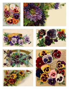 Collage of flowers that bloom in the spring and/or fall ~ violets, pansies, mums.