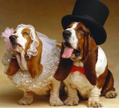 Involving a pet wedding within important moments of our human lives is pretty common today, particularly in human weddings. But a pet's role in a wedding does not have to be limited to just being the ring bearer or the Best Man (or should it be Best Dog?).