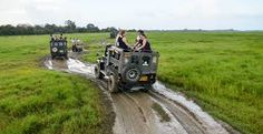 Explore the Sri Lanka adventure Wildlife and Safari Tour Packages with best travel agent in Sri Lanka and get lifetime unforgettable experience. Safari Jeep, Wildlife Safari, Sri Lanka, Habitats, Monster Trucks, National Parks, Tours, Adventure, Pictures