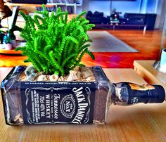 Succulents in a Jack Daniels bottle pot