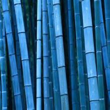 Blue rare bamboo seeds, Ornamental Garden, Herb plantation  - 20 pcs / lot(China (Mainland))