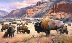 Page not found - The Old West Art of Jack Sorenson Murals Your Way, Native American Art, American Bison, American Indians, American Animals, Cowboy Art, Animal Wallpaper, Wallpaper Murals, Le Far West