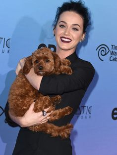 """Katy Perry snuggles with her dog Butters at the world premiere of """"Katy Perry: The Prismatic World Tour"""" March 26 in Los Angeles.  Steve Granitz, WireImage"""
